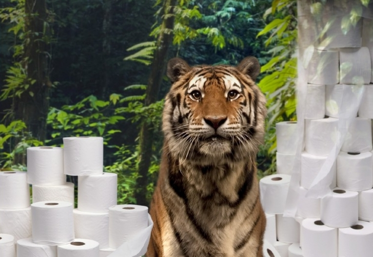 Tiger Conservation   Boycott Livi and Paseo Toilet Paper   Stop Deforestation in Sumatra