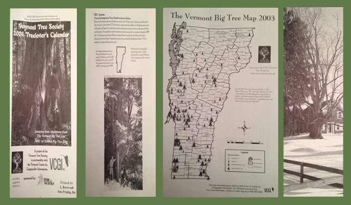 Vermont Tree Society | Conserving Champion Trees in the Green Mountain State