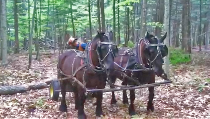 Logging with Horses in Vermont | Naked Table Project | Charles Shackleton