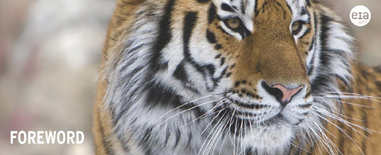 The Siberian Tiger's Fate Rests with Lumber Liquidators?