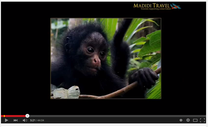 Conservation through ecotourism at Madidi Travel in the Bolivian Amazon