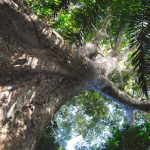 Trees: the key to health, wealth and happiness