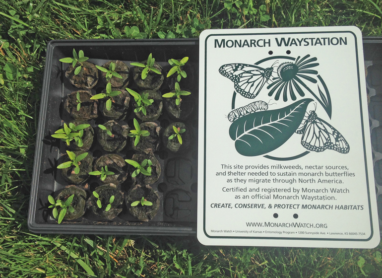 A monarch butterfly waystation in Vernon, VT.