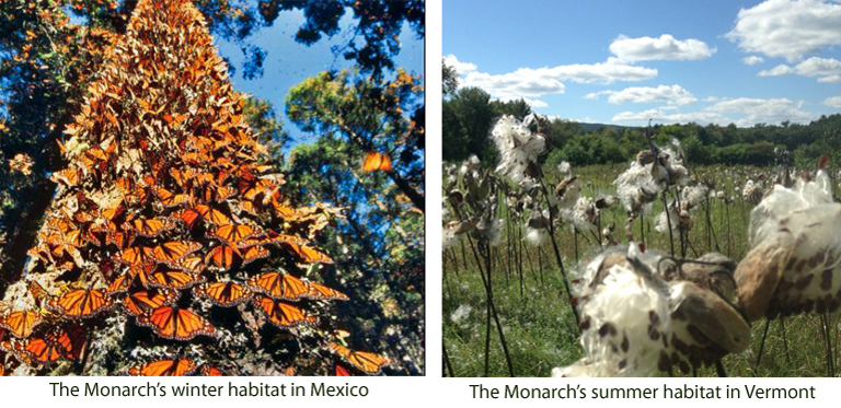 Conserving monarch butterfly habitat in Vermont and Mexico
