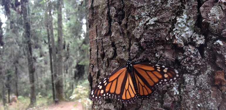Earth Day 2016 - Trees for Monarchs