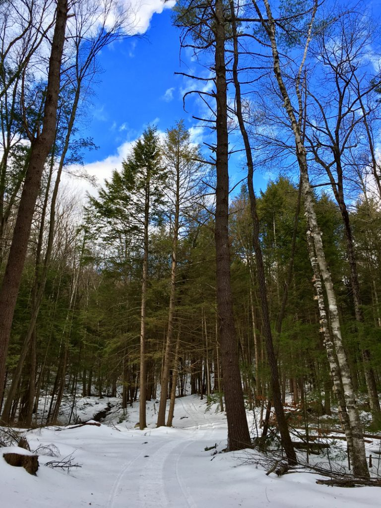 Our Forest at Vermont Woods Studios | International Day of Forests