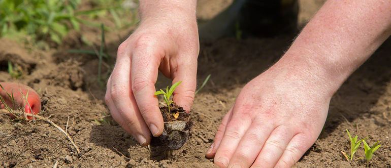 Plant a tree for Earth Day 2017