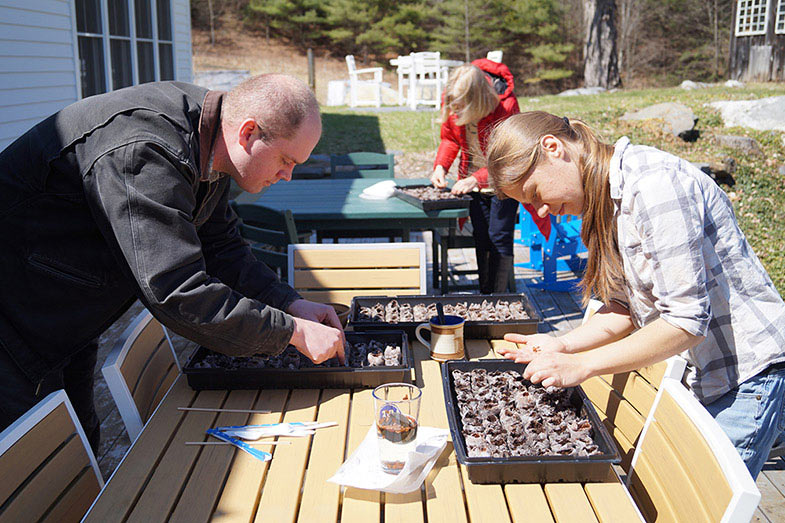 Planting Milkweed for Monarchs | Vermont's Sustainable Furniture Store