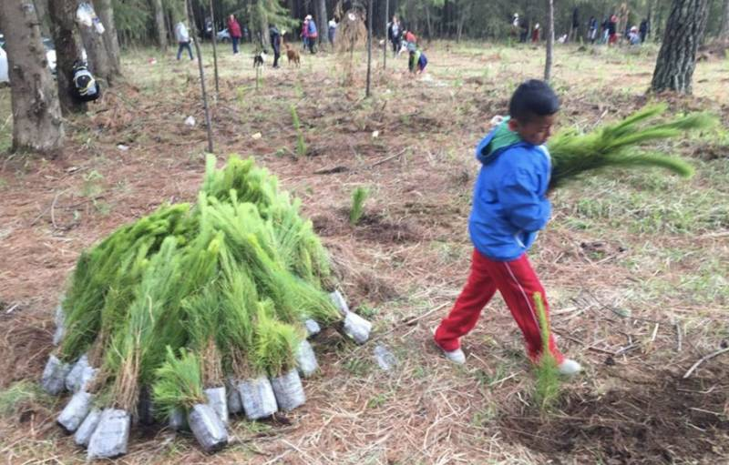 Reforestation of Monarch Butterfly Habitat in Mexico | Vermont Woods Studios