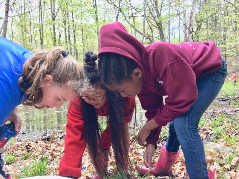 Third graders studying the forest floor | Environmental Science | Forest Conservation | Vermont Woods Studios