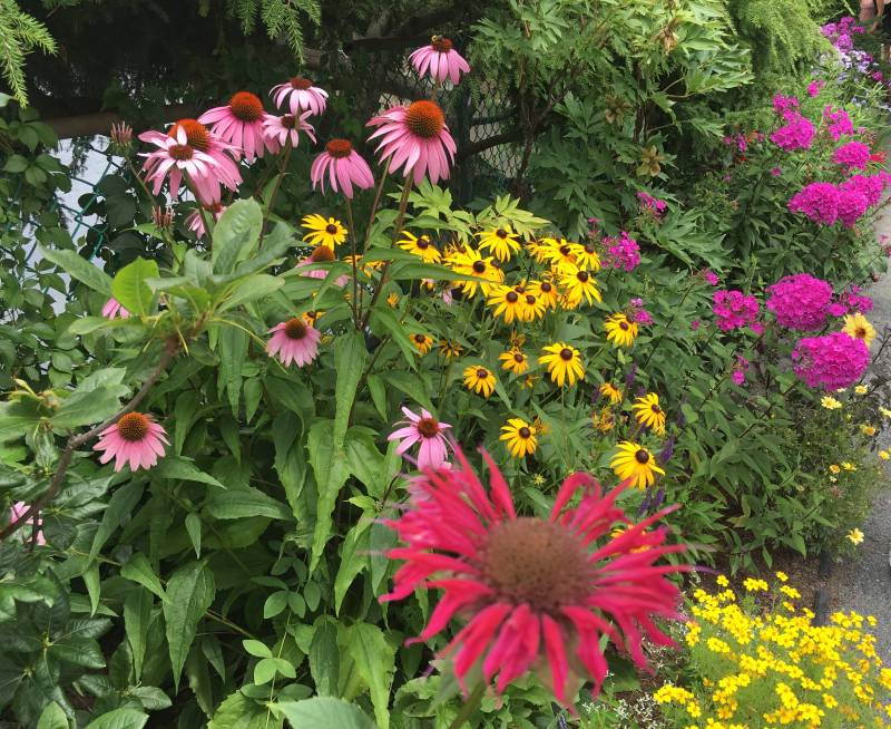 Flower Gardens Create Food | Saving the Monarch Butterfly