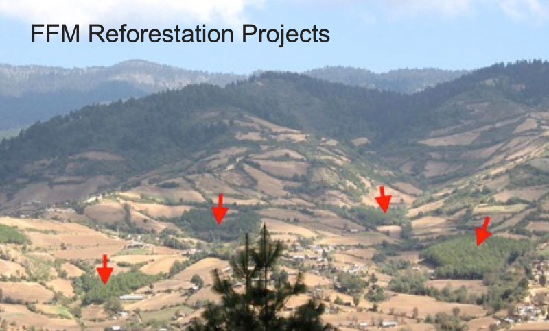 FFM Reforestation Projects in Mexico | Help the Monarchs