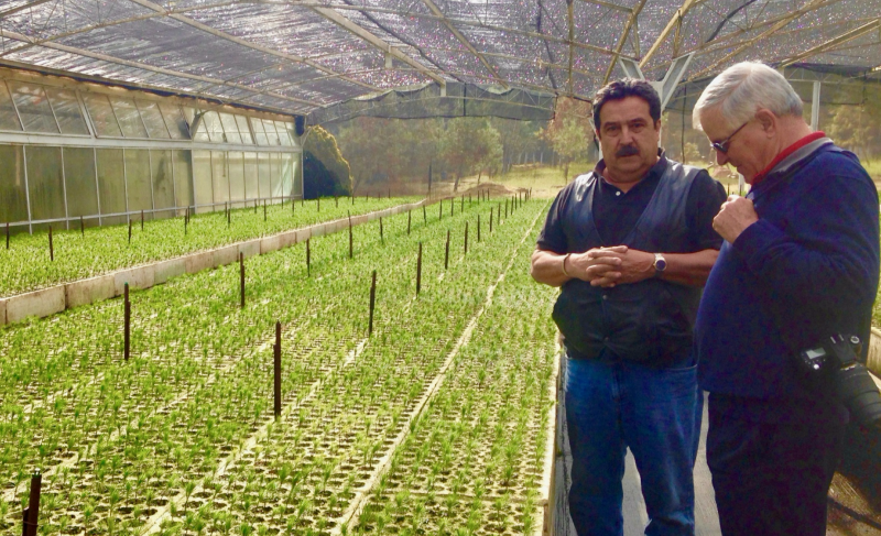 Jose Luis Alvarez and millions of tree seedlings in Mexico
