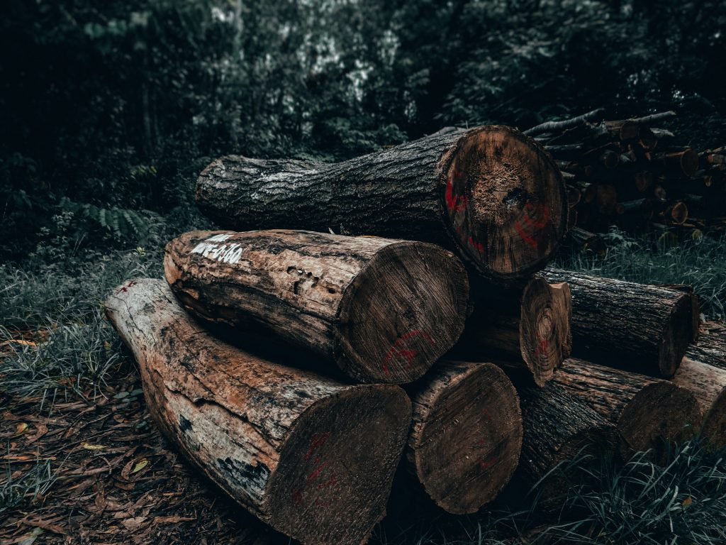 Logs lay on the forest floor. Image from Unsplash